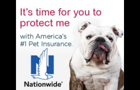 Healthcare plans for your pet only from Nationwide